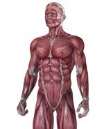 Enfermedades por aparatos. Huesos, articulaciones y músculos. Polimiositis y dermatomiositis
