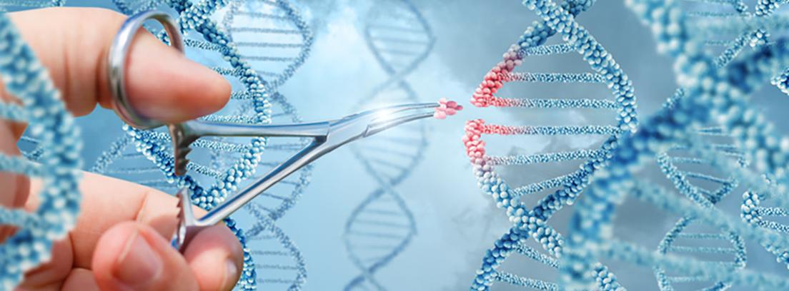 Estudio del perfil genético de la obesidad