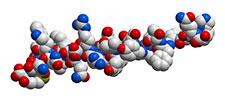 molécula-hidratos de carbono