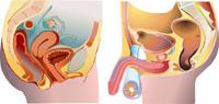 Salud Mayores. Síndromes geriátricos. Incontinencia urinaria. Anatomía y fisiología
