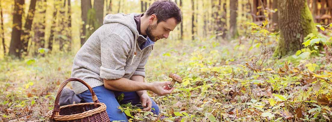Setas, sabor de otoño: hombre recogiendo setas en el campo