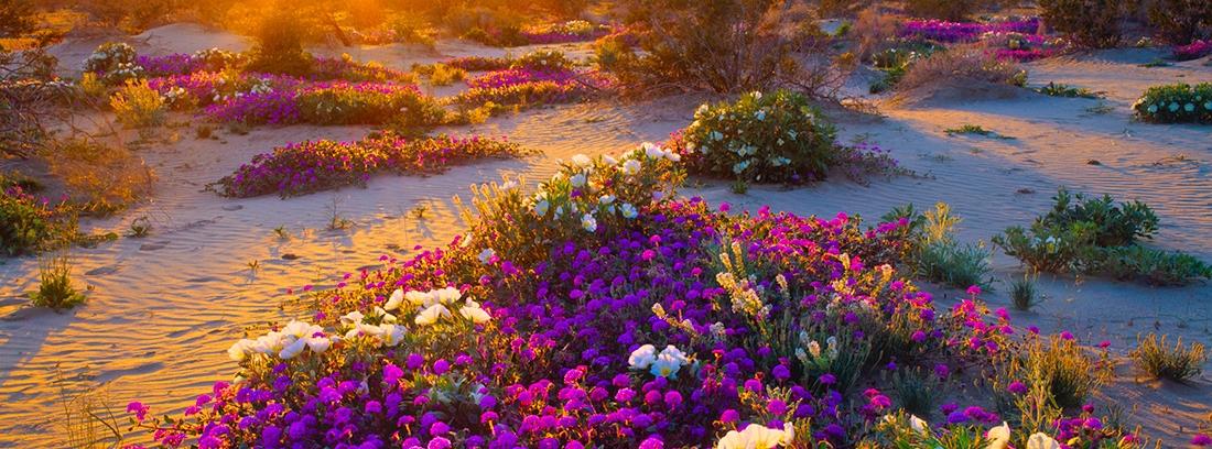 Las esencias florales de California