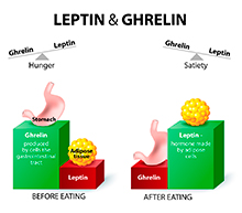 leptina-grelina