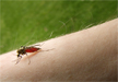 Bienestar. Qué hacer frente a las picaduras de insectos y de medusas