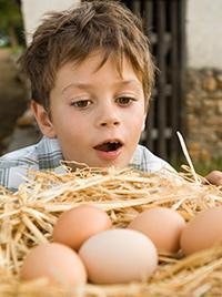 salud-niño-nutrición-alergia-huevo