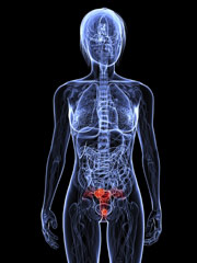 Salud Mujer. Enfermedades de la mujer. Cáncer ginecológico. Cáncer de cuello de útero
