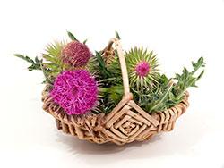 Medicina alternativa-naturoterapía-cardo mariano-planta