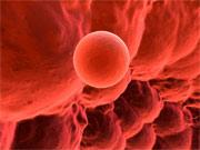 Salud Mujer. Esterilidad e Infertilidad femenina. Donación y preservación de la fertilidad