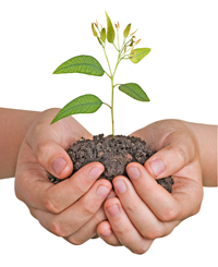 Medicina alternativa-Naturopatia-eucalipto-invierno