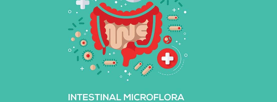 dibujo de la flora intestinal