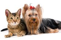 Bienestar-habitos de vida saludable-higiene-mascotas-previene-infecciones