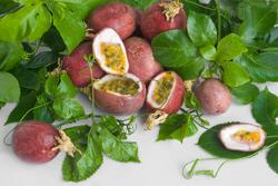 pasiflora-naturopatia-fruto