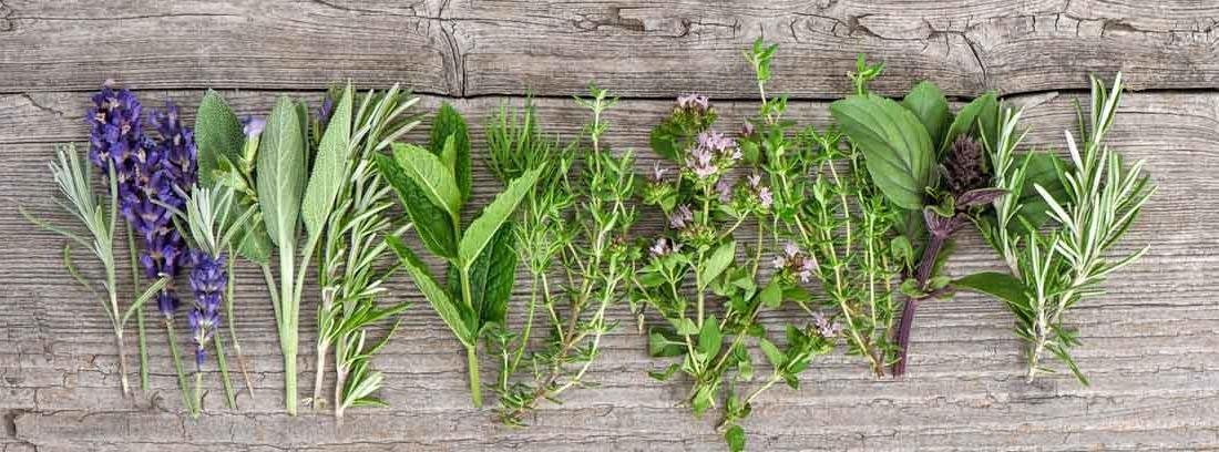 plantas medicinales primavera