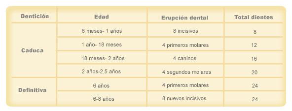 Cronología dental