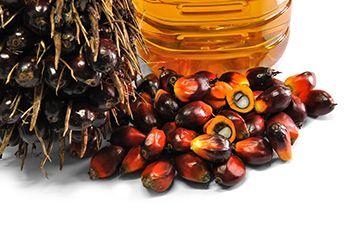 Nutrición y salud - reportajes- aceite de palma