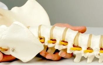 colimna vertebral sujeta por unas manos