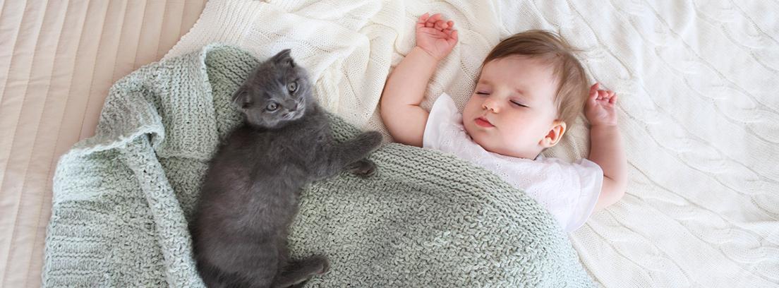 bebe durmiendo con un gatito negro