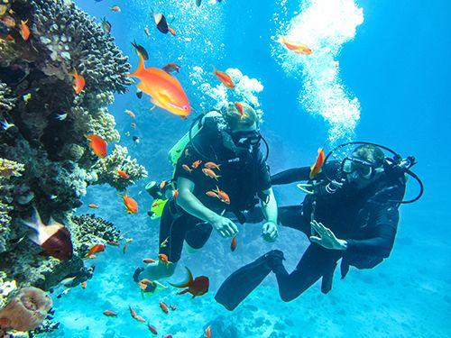 dos personas practicando submarinismo con peces y colares alrededor