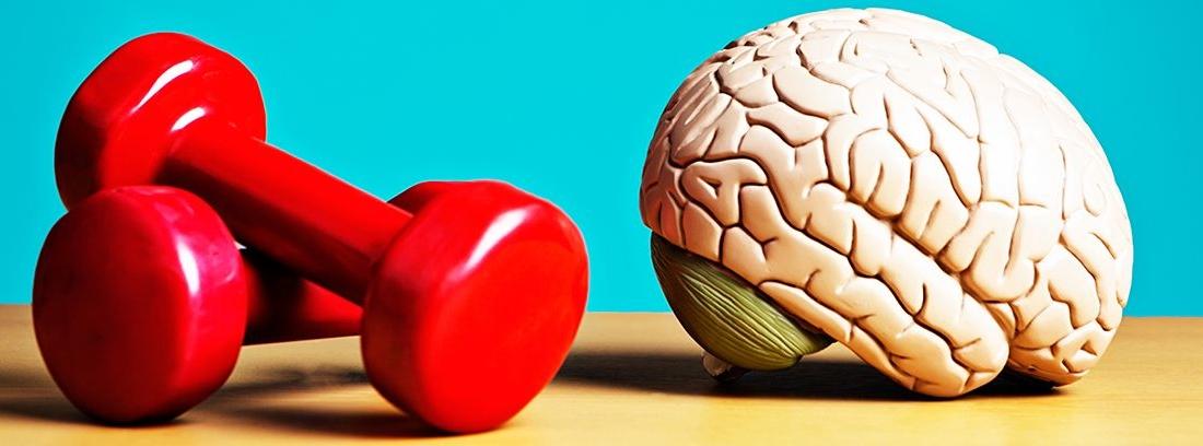 dos mancuernas rojas y un cerebro