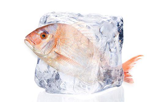 besugo metido en un cubito de hielo