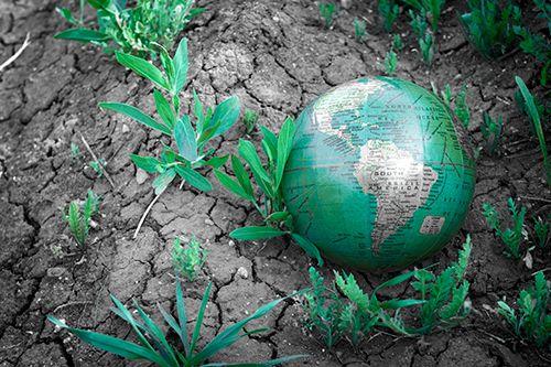 bola del mundo sobre suelo desértico con algunas plantas