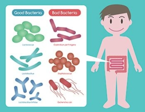 Dibujo nino con bacterias que se encuentran en el intestino