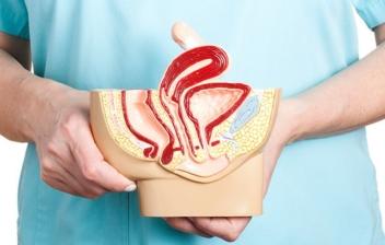 vagina y aparato reproductor femenino