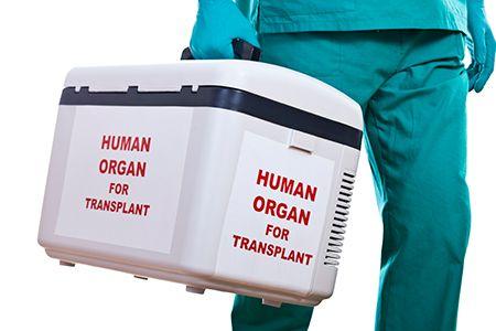 persona transportando una nevera con un órgano humano