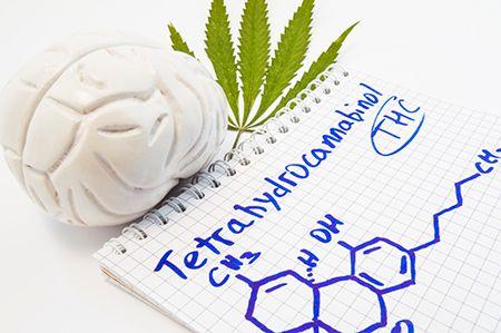 hoja de cannabis, un cerebro y fórmula escrita en un cuaderno