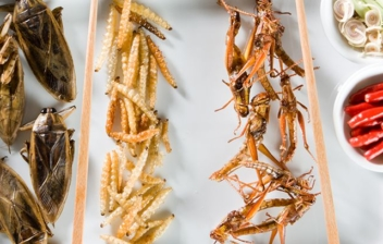 diferentes platos de insectos comestibles