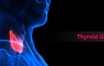 Anatomía de las glándulas del tiroides