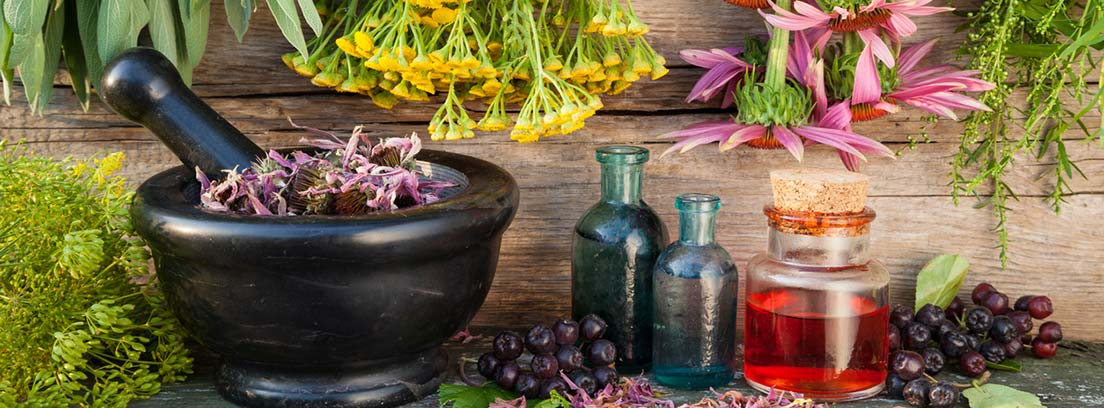 Fitoterapia y el uso de las plantas medicinales –canalSALUD
