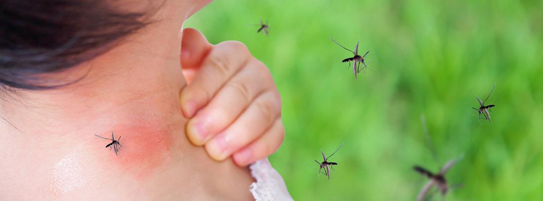 picadura de mosquito en cuello de mujer y mosquitos volando alrededor