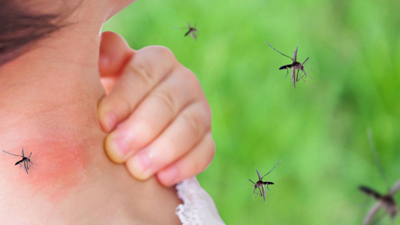 Síntomas del dengue y contagio por mosquitos –canalSALUD