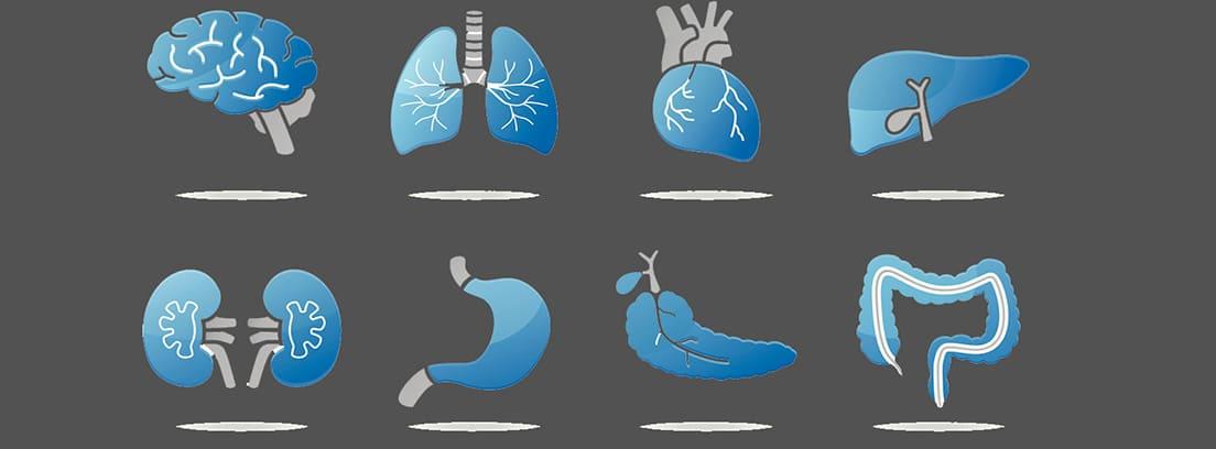Órganos que no se necesitan para vivir: diferentes órganos del cuerpo humano