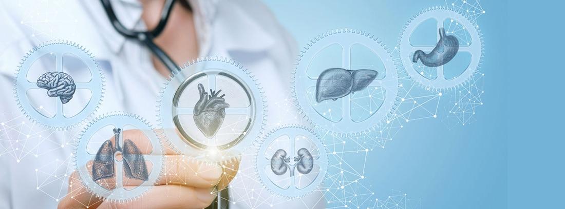 12 Órganos sin lo que podrías vivir : El médico examina diferentes órganos humanos