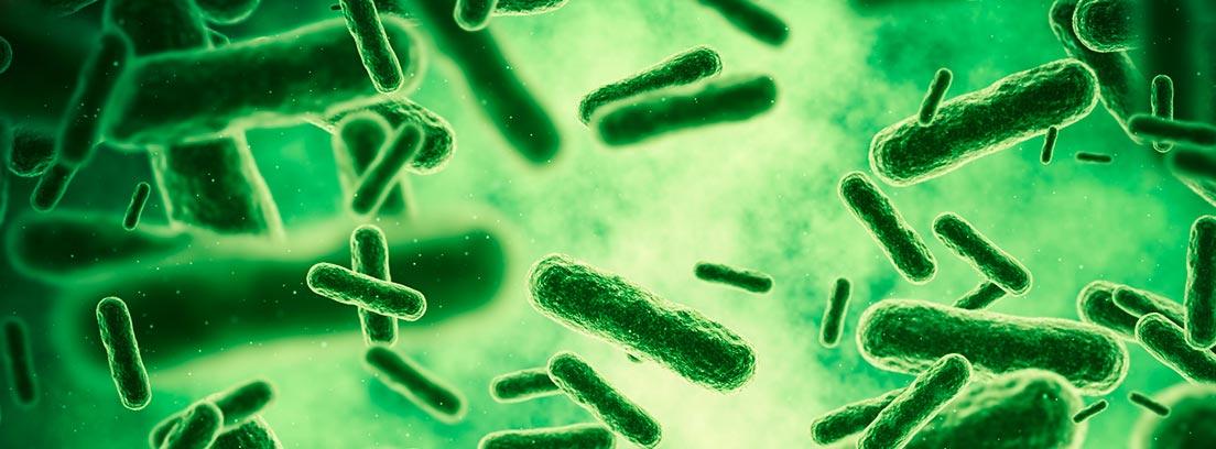 Diferencia entre un virus y una bacteria: bacterias
