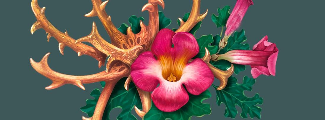 Harpagofito para el dolor articular: planta de hapargofito