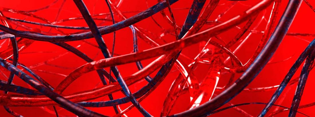 Diferencia entre arterias, venas y capilares: arterias y venas