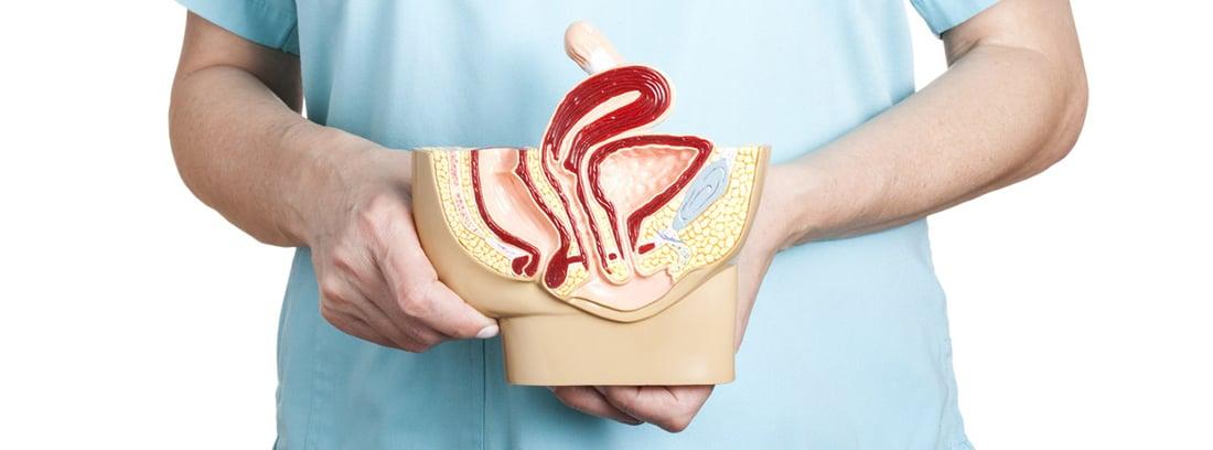 Síndrome de hiperlaxitud vaginal: muestra del aparato reproductor femenino incluido la vagina