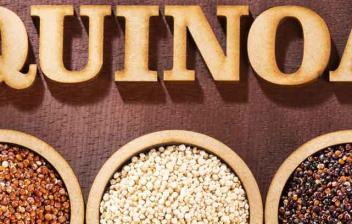 Ventajas de comer quinoa para la salud: tres variedades de quinoa