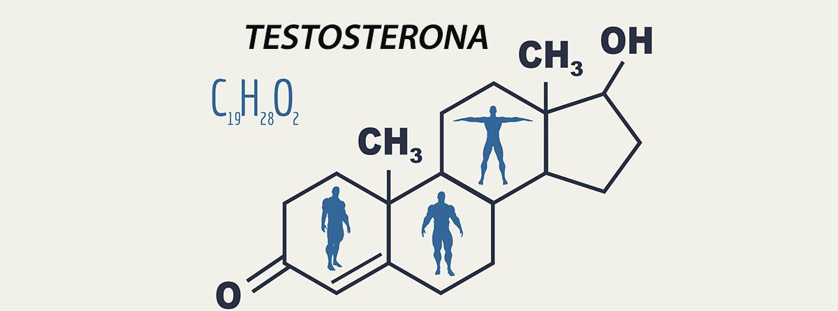 Molécula de Testosterona